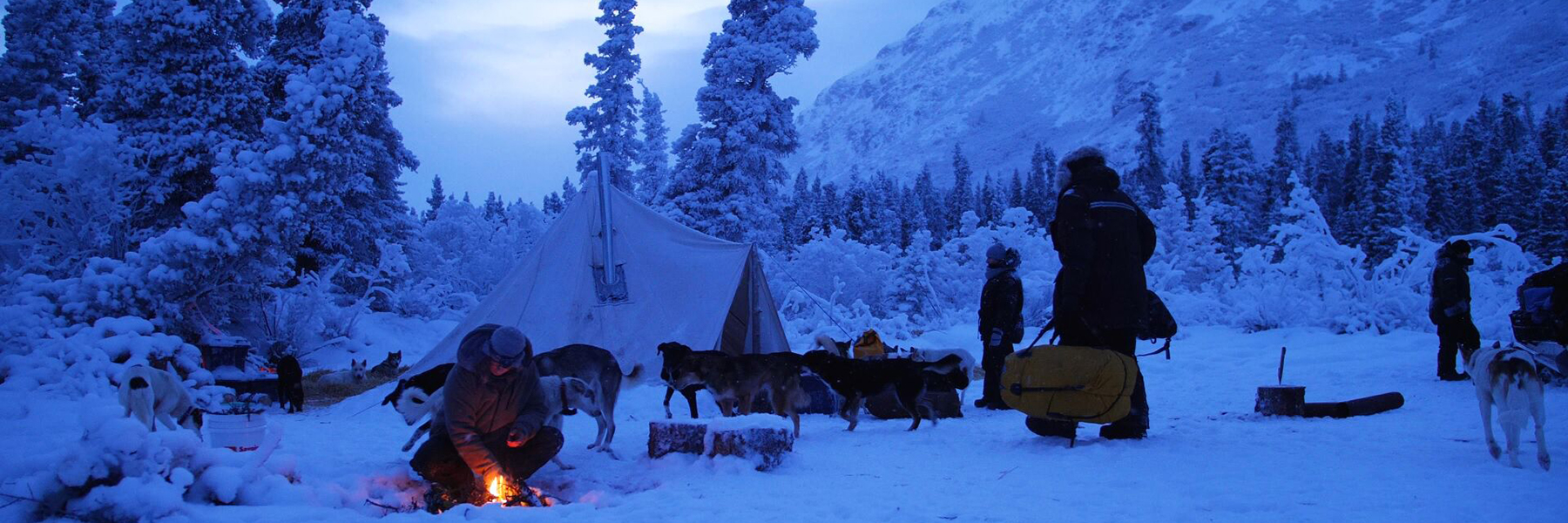 Into the Wild Adventures, dog sledding tours and winter adventures in the Yukon Territory, Canada - Dogsledding Tours
