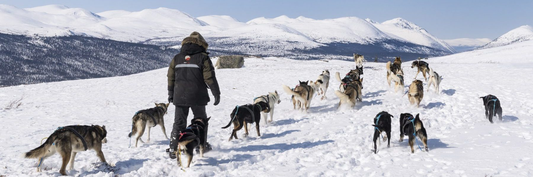 Into the Wild Adventures, dog sledding tours and winter adventures in the Yukon Territory, Canada - Our philosophy: ethical mushing